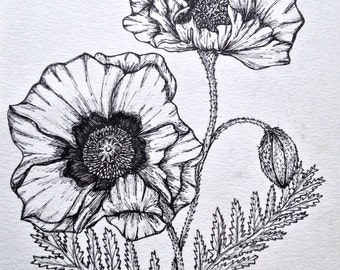 Poppies Ink Illustration - Original Botanical Ink Illustration - Poppy Floral Illustration - Botanical Drawing - Scientific illustration