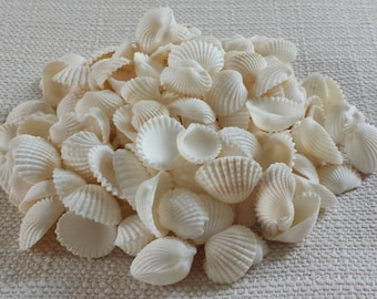 Beach Decor, Small Shells, White Shells, Seashells, Shells, Craft Shells, Tiny Shells, White Cardium Clam Shells
