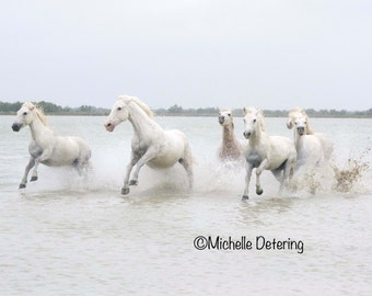 Wild Horses of the Camargue - Wild Horse Photograph, Wild Horse Art, Wild Horse Decor, Horse Decor, White Horses, White Horse Photo, Horses