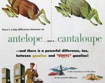 1951 Ethyl Gasoline Ad - Antelope & Cantaloupe - Frankenberg Animal Art - 1950s Gas Station - Retro Advertising