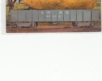 1910 Antique Postcard Exaggerated Pear On Southern Pacific Rail Car,Unused