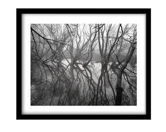 trees, black and white photography, FREE SHIPPING, nature photography prints, black and white nature,  nature art, black and white landscape