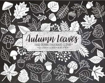 80% OFF SALE. Fall Leaf Clipart. Chalk Leaves. Autumn Foliage, Acorn, Mushroom Clip Art. Doodle Hand Drawn Autumn Chalkboard Illustration