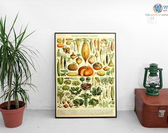 "Adolphe Millot Garden Vegetables - ""Legume et plante potageres"" - Digitally restored  print / art / poster"