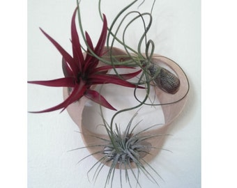 Mobias Strip Air Plant Holder!