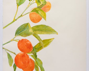Edwina Nelson, Kumquats, 2015