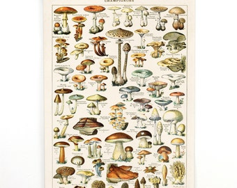 Mushroom Poster - Pull Down Chart style Wall hanging Illustration by Adolphe Millot - Fungi Educational Diagram Handmade  CP239cv