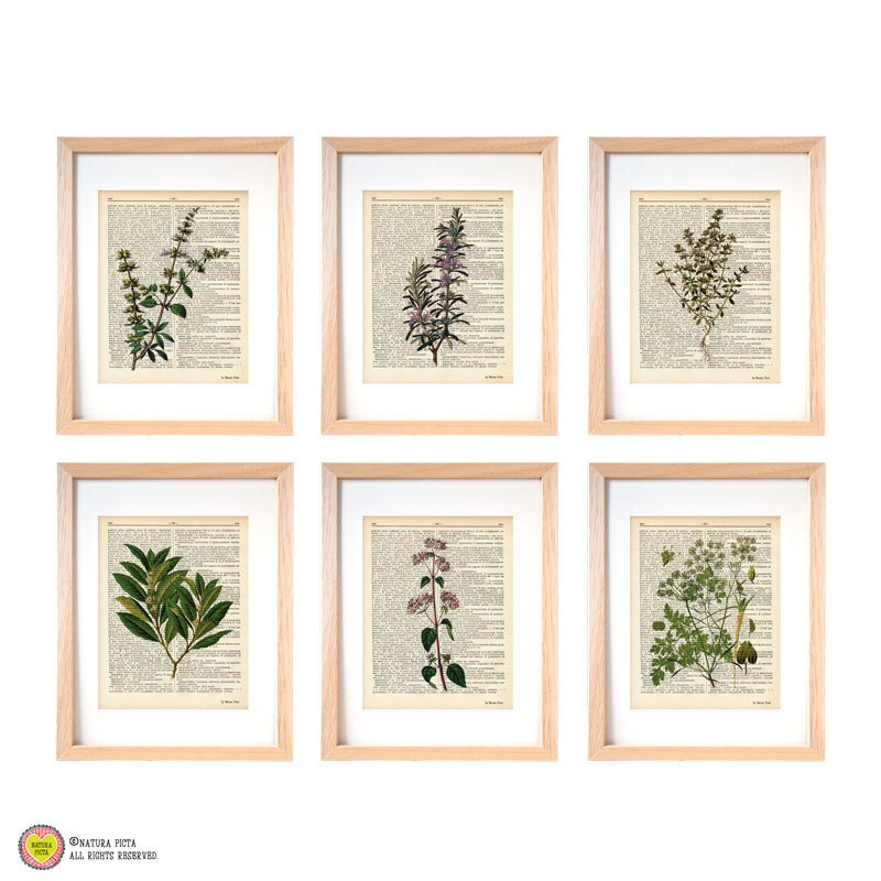 Kitchen Herbs Wall Art Set Of 6 Set Of 6 Herbs Dictionary