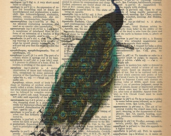 Dictionary Art Print - Beautiful Peacock with Feathers - Upcycled Vintage Dictionary Page Poster Print - Size 8x10