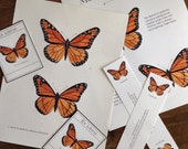 Monarch vs Viceroy Butterfly Print Pack with Bookmarks and Bookplates- Digital - Printable PDF