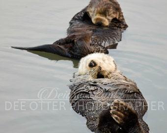 Sea otter pair 8x10 photo print