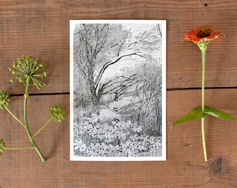 Tree Postcard, nature art postcard, tree illustration, postcrossing, forest postcard, pencil drawing, black and white postcard, scandinavian