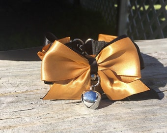 Gold and black kitten play collar