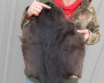 1 - Tanned Northern Winter Beaver