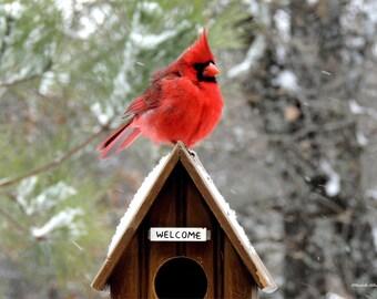 Items Similar To Red Cardinal In Tree Free Shipping Bird