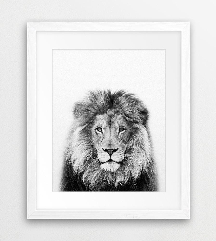 lion print lion wall art safari african animal lion photo. Black Bedroom Furniture Sets. Home Design Ideas
