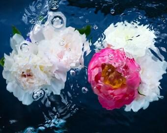 Huge Art, Large Floral Print, Peony Flower Art, Blue, Pink, White, Modern Art by Jessica Kenyon