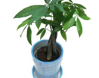BULLSEYE Planter