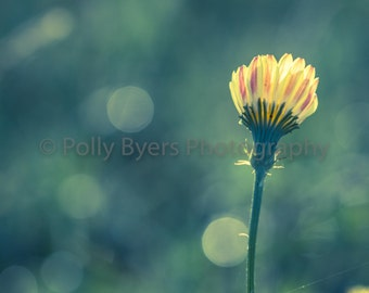 Dotty Wildflower Fine Art Photography