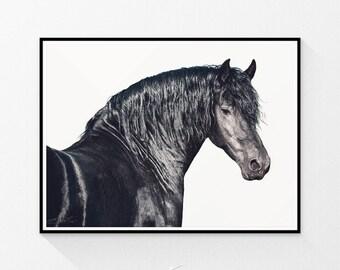 Horse print, black horse photo, western decor, equine art, horse art, horse decor, horse wall art, horse photography, black and white photo