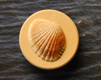 Seashell Magnet 3