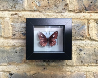 BUTTERFLY  MINIATURES  IV -  Handcrafted 2D print mounted inside picture frame