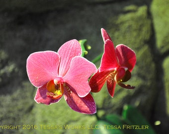 Red Orchids 8x10 glossy print