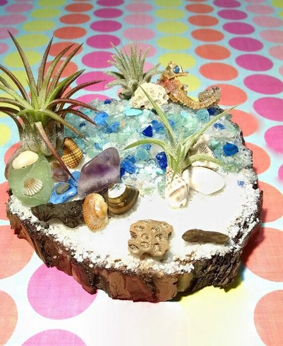 Items similar to air plant decor beach decor driftwood for Beachy decor items