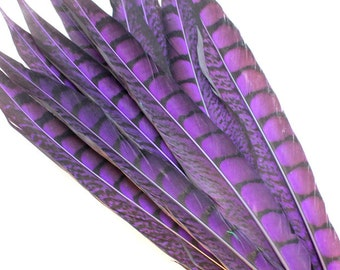 11-13 Inch Purple Lady Amherst Feathers. (5) Purple Pheasant Feather. Lady Amherst Pheasant Feathers. Purple Colored Pheasant Tail Feathers