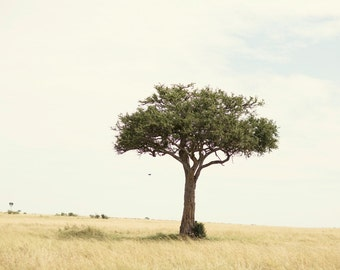 Tree Hugger 11x14 Print