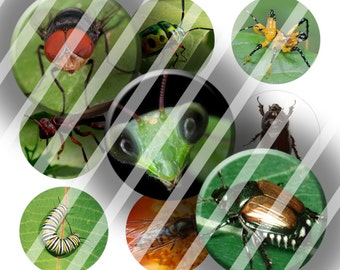 Digital Bottle Cap Collage Sheet - Insects 1 - 1 Inch Circles Digital Images for Bottlecaps