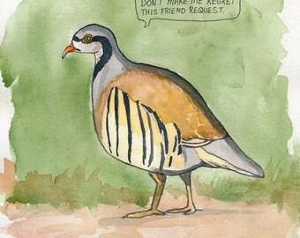 The Chukar Partridge
