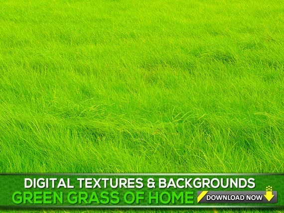 Blades of grass Backgrounds - PPT Backgrounds Templates