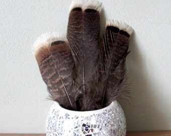 "Wild Turkey Feathers (6-8"")"