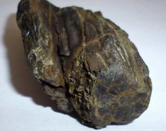 Fossilised Wood, Petrified Wood
