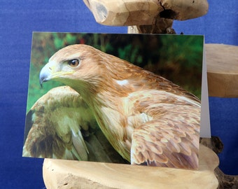 Tawny Eagle - a blank greetings card suitablefor  birthdays and other celebrations from our original photograph