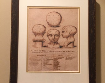 Phrenology 1800's Print Reproduction on Canvas - Dark Brown Distressed/Antiqued Frame