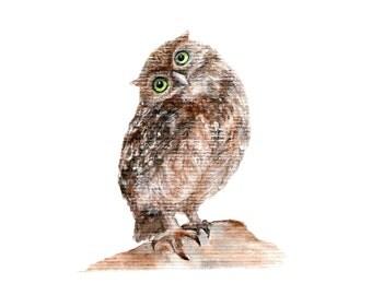 Owl. Watercolor