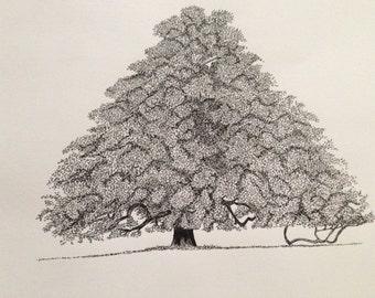 Framed drawing - oak tree