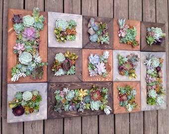 """20""""x10"""" Living Wall Succulent Planter Vertical Hanging Garden Art Rustic Wood Arrangement Flower Bouquet Gift"""