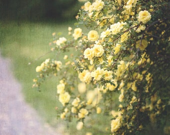 Nature Photography, Botanical Art, Flower Photography, Yellow Roses, Ethereal, Soft Images, Wall Art, Yellow, Green