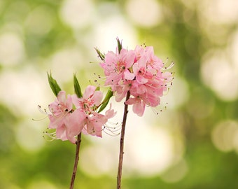 Blooms in pink