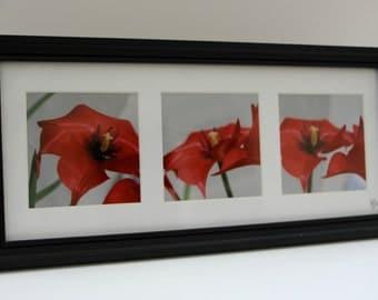 3 Red flower photo: Framed