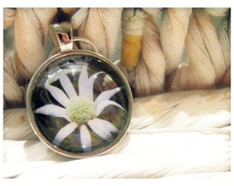 Pendant & Card: Flannel Flower Photo