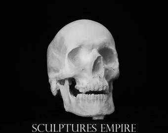 HUMAN SKULL REPLICA, full size realistic replica made of gypsum in classic style and painted in white pink burgundy color