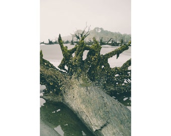 Coastal Wall Decor - Driftwood Photo - Seaside Print - Seaside Photo - Vertical Photo - Digital Photo - Digital Download - Instant Download