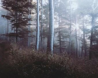 Forest Landscape - Landscape Photo - Woodland Photo - Forest - Forest Photo - Nature - Digital Photo - Digital Download - Living Room Decor