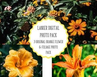 Digital Paper, Flower Photography, Orange Flower, Printable Scrapbook Paper, Digital Scrapbooking, Website Background Images, Desktop Images