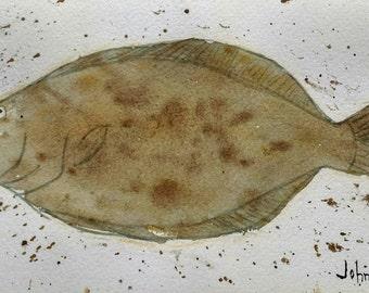 Flounder No. 2