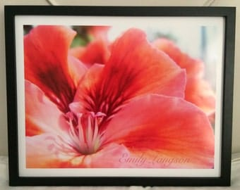 Pink geranium - flower photography - frame not included